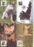 bnk fil Romania set 4 maxime prima zi a emisiunii Pui de animale salbatice 2012