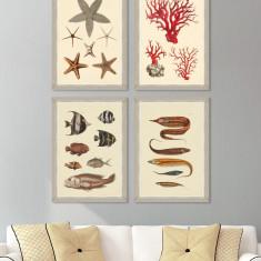 Tablou 4 piese Framed Art Marine Life Plates