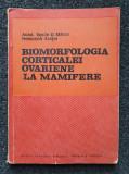 BIOMORFOLOGIA CORTICALEI OVARIENE LA MAMIFERE - Marza, Aratei