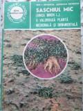 SASCHIUL MIC (VINCA MINOR L.) O VALOROASA PLANTA MEDICINALA SI ORNAMENTALA-ION ROVENTA, DOMNICA ROVENTA