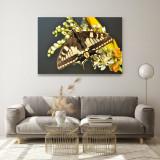 """Tablou imprimat pe pânză canvas """"- 60x80 cm-FLUTURE-"""