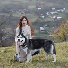 Husky Siberian împerechere