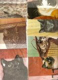 lot vederi caini pisici 40
