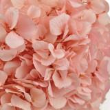 Cumpara ieftin Hortensia light pink 35cm