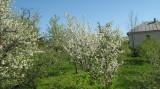Teren în Feleacu, Teren intravilan