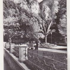 bnk cp Baile Herculane - Vedere din parc - necirculata