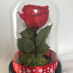 Trandafir criogenat rosu Valentine, diametru floare 8 cm