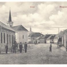 3821 - TARGU LAPUS, Maramures, Romania - old postcard - used, Circulata, Printata