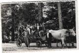D96 Car cu boi anii 1930
