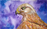 Acuarela portret soim - tablouri tablou picturi pictura grafica decor