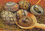 Carte postala Bucovina SV169 Moldovita - Muzeul oualor incondeiate
