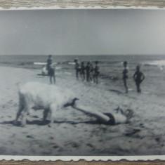 La plaja cu cainele/ perioada interbelica