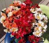 Buchet flori artificiale - FLORI de CIRES 15 P , H 30 cm   PEACH, ROSU, ORANGE