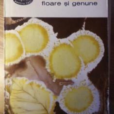 FLOARE SI GENUNE - P. CERNA