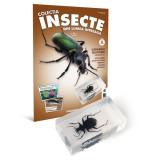 Colectia Insecte din lumea intreaga - Nr. 06: Carabida bijuterie Mania Film