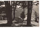 CPIB 17472 CARTE POSTALA - TUSNAD. LACUL SFANTA ANA, Circulata, Fotografie