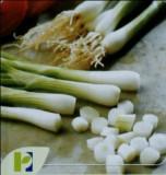 Seminte ceapa WHITE LISBON POP VRIEND si PIETERPIKZONEN 25 g