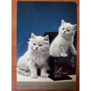 Set 4 carti postale necirculate cu pisici, vechi, colectia La Rose Paris