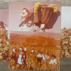 Culesul strugurilor// lot 4 fotografii de propaganda