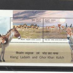 Fauna,cai,magarusi ,India.
