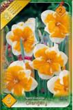 Narcise Orangery
