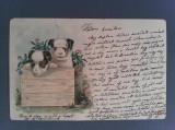 Cumpara ieftin CARTE POȘTALĂ LITOGRAFIE UNGARIA 1900 CÂINI - CIRCULATĂ, Circulata, Printata