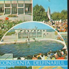 CPI B12702 CARTE POSTALA - CONSTANTA. DELFINARIU