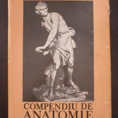 COMPENDIU DE ANATOMIE - Ifrim, Niculescu