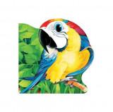 Papagalul. Primii paşi