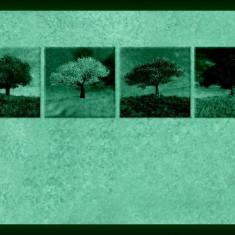 Set tablou fosforescent Patru Anotimpuri