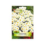 Seminte flori Florian Crizantema 0 5 g