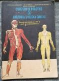 Iordache Anatomia și igiena omului 1997 Manual cl a 8 Scoli Speciale Ajutătoare, Clasa 8, Alte materii, Manuale