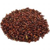 Seminte gutui japonez (Chaenomeles japonica) 50 buc