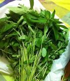 IUTA , VERITABILA IUTA - Corchorus olitorius - 10 seminte pentru semanat