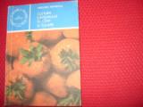 CULTURA  CAPSUNULUI  IN  CAMP  SI  SOLARII   ( rara ) *