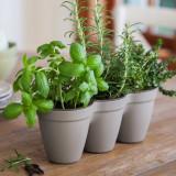 Ghiveci triplu gri fara farfurie Keter Ivy Herbs 2.5 L