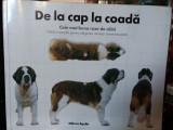 De la cap la coadã. Cele mai bune rase de câini. Ghidul pt alegerea câinelui dvs