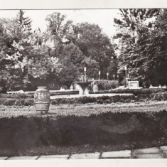 bnk cp Buzias - Vedere din parc - circulata