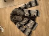 Haina de blana chinchilla rex cu guler de vulpe argintie