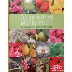 De ce sufera planta mea? Remedii pentru gradina de acasa