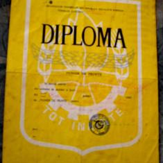 Diploma   Pionier   de   Frunte