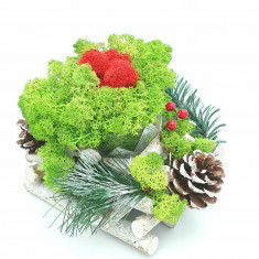 Cumpara ieftin Aranjament cu licheni naturali stabilizati, 13x13 cm