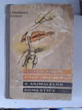PATOLOGIA CHIRURGICALA A ANIMALELOR DOMESTICE - Marinescu, Gallo