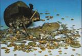 """Carte Postala - Un tezaur Tataro-Bizantin de ka Uzum-Bair (sec. XIII-XIV) """"CP12"""", Necirculata, Fotografie"""