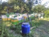 Vand familii de albine pe 10 rame 3/4