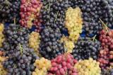 Vand struguri altoiti pentru vin, Farmer Brand