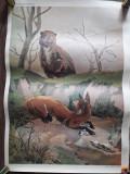 Afis scolar Ursul pacalit de vulpe Ion Creanga anii 1980 didactic comunist
