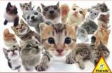 Cumpara ieftin Puzzle Piatnik - 1000 de piese - Pisici