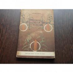 AMELIORAREA SI PRODUCEREA DE SAMANTA DE PORUMB - A.B.SALAMOV