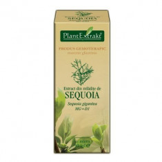 Extract din mlădiţe de SEQUOIA 50ml Plant Extrakt